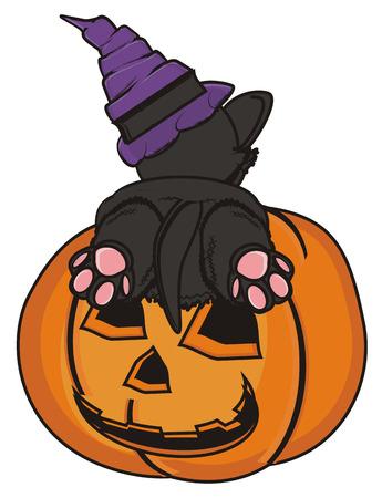 lying in: black cat in hat lying on the pumpkin