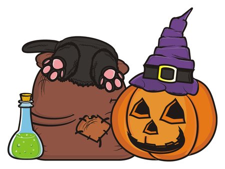october 31: witchs elements of Halloween Stock Photo