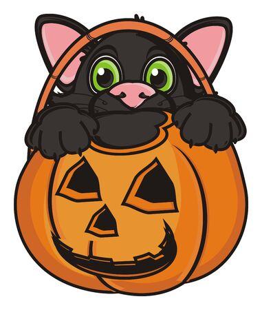 face of balck cat stick out from an empty basket of pumpkin Stock Photo