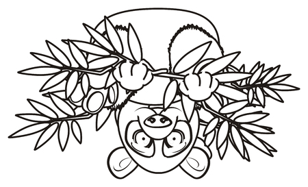 lie down: coloring panda sit upside down on the bamboo Stock Photo