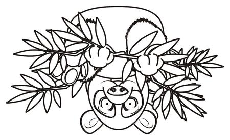 cabeza abajo: panda para colorear sientan en posición invertida sobre el bambú