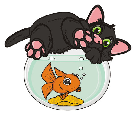 stick out: black cat lying top on the aquarium with goldfish Stock Photo