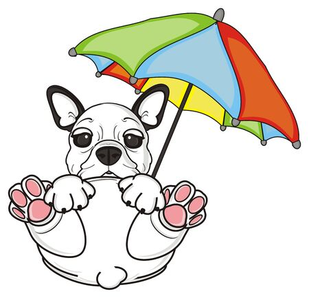 french bulldog: ciue french bulldog sit under colorful an umbrella Stock Photo