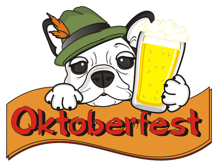 stick out: white muzzle of french bulldog in hat with glass of beer stick out from ribbon with word Oktoberfest
