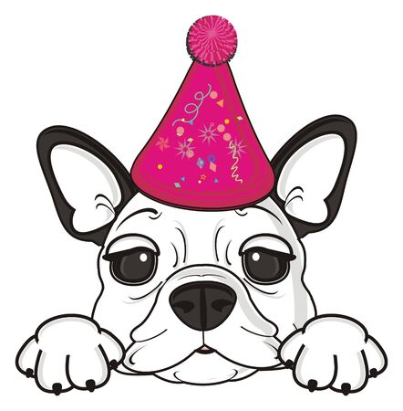 snout: snout of french bulldog in pink birthday cap
