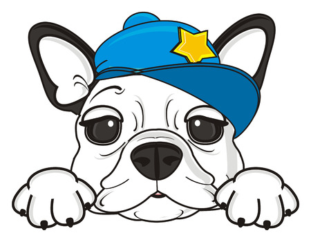 muzzle: cute muzzle of french bulldog in cool blue cap with gold star