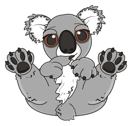 shy: shy and cute koala lying on his back