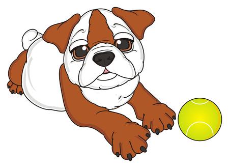 lying: bulldog lying with tennis ball