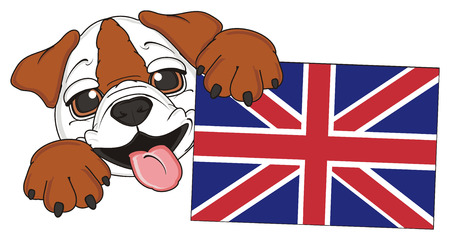 stick out: king muzzle of bulldog peek up from little UK flag
