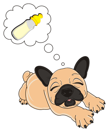 beige french bulldog lying and dreaming about bottle of milk