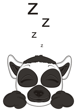 lemur: sleeping muzzle of lemur and letters z Stock Photo