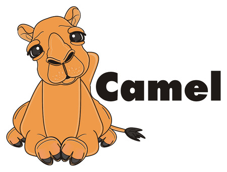 camel lying near the black word camel