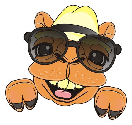 snout: laughing snout of camel in black sunglasses and hat Stock Photo