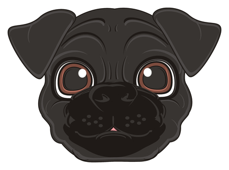 snout of black pug