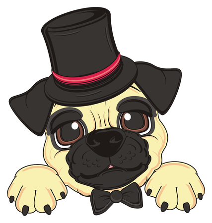 black hat: head of pug with black bow and hat Stock Photo