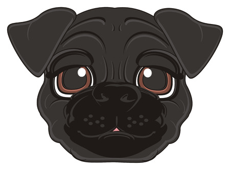 snout: snout of black pug
