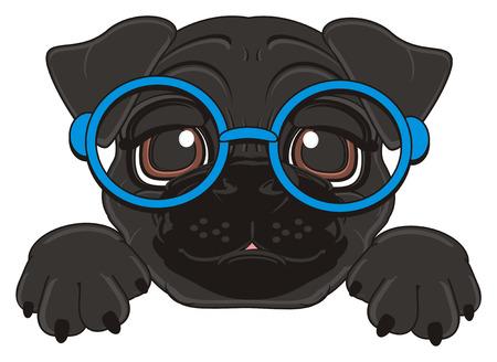 black face of pug in blue glasses