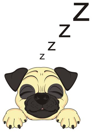sleeping snout of pug with letters z