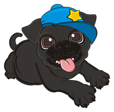 black pug: crazy black pug in blue cap Stock Photo