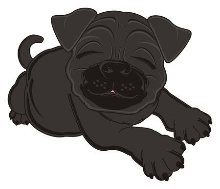 black pug: sleeping black pug lying Stock Photo