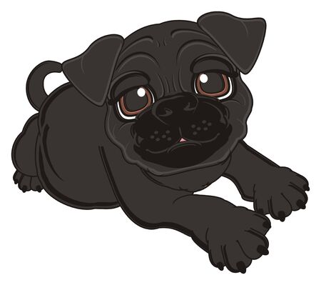 black pug: black pug lying