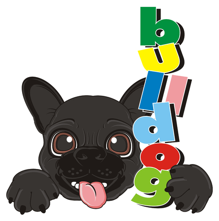 snout: snout of black french bulldog with word bulldog