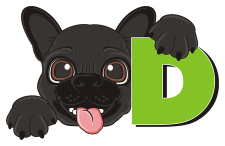 snout: snout of black french bulldog with letter d