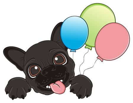 snout: snout of black french bulldog with air balloons