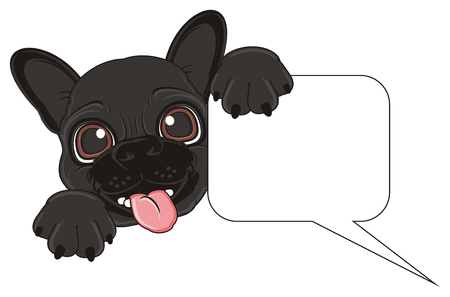 french bulldog: snout of black french bulldog with clean footnote Stock Photo