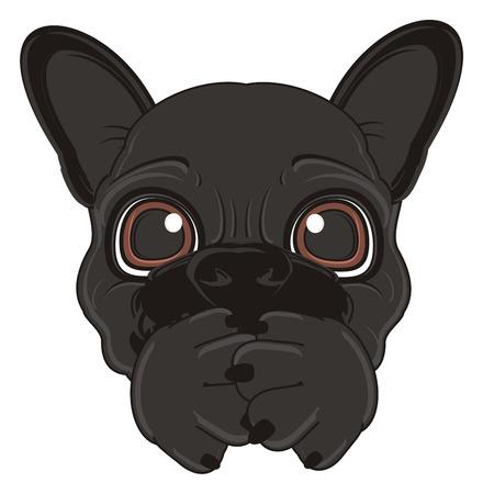 boca cerrada: la cara de bulldog francés negro con la boca cerrada Foto de archivo