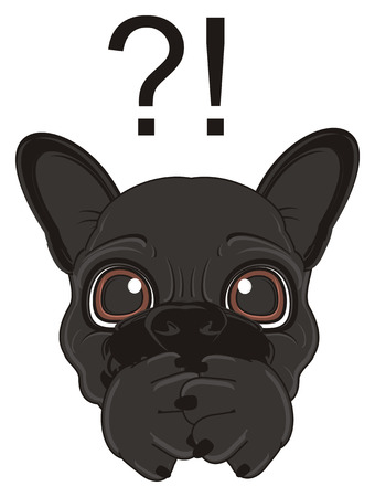 french bulldog: muzzle of black french bulldog with question mark