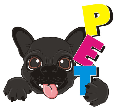 french bulldog: snout of black french bulldog with word pet