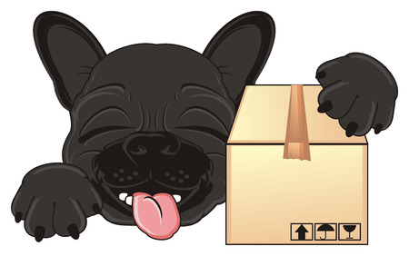 french bulldog: sleeping snout of black french bulldog with a box Stock Photo