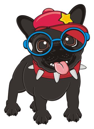 french bulldog: trendy black french bulldog with collar and cap and glasses Stock Photo