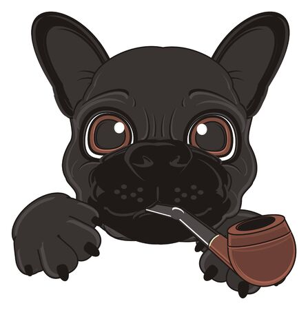 tabacco: face of black french bulldog with pipe Stock Photo