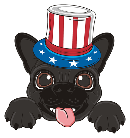 french bulldog: face of black french bulldog in USA hat