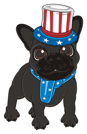 french bulldog: black french bulldog in costume of American flag