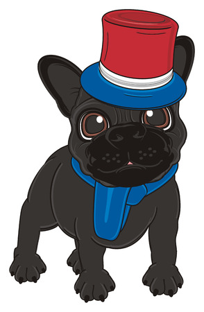 black french bulldog in clothes of France colors