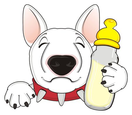 dog walking: sleeping muzzle of white bull terrier hold a bottle of milk