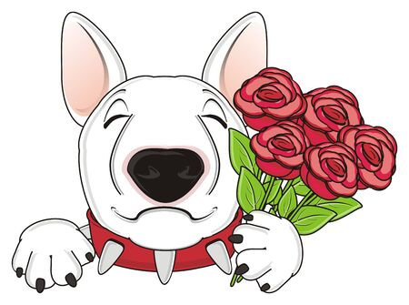 snout of white bull terrier hold a flowers Stock Photo