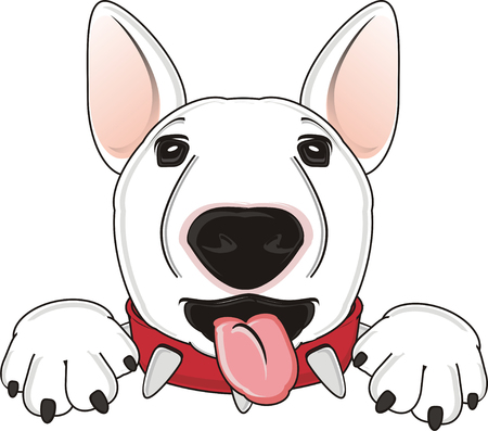 face of white bull terrier show his tongue