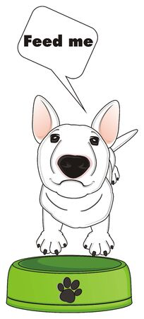 white bull terrier ask to feed him