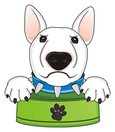 stern muzzle of white bull terrier with empty bowl Stock Photo