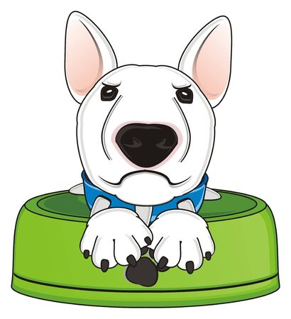 angry muzzle of white bull terrier sit inside in empty bowl
