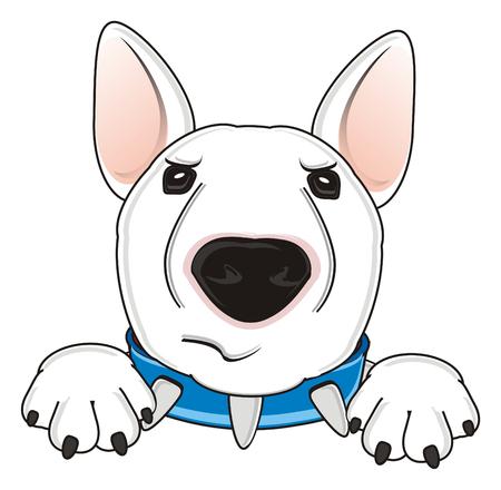 stern: stern snout of white bull terrier Stock Photo