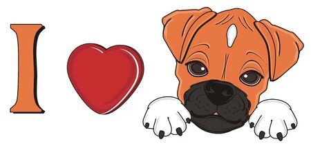 i love germany boxer dog