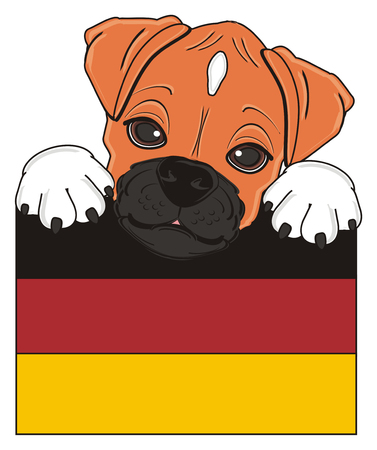 head of boxer dog peek up from Germany flag