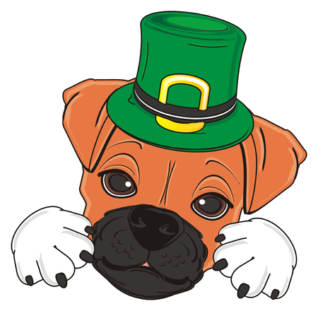 face of boxer dog in green Patricks hat Stock Photo