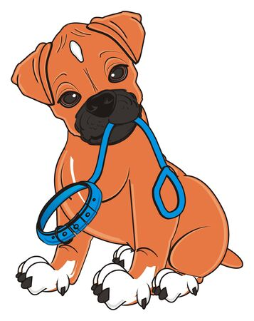 boxer dog sit and hold a leash with on his mouth