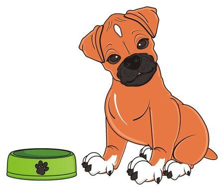 boxer dog sit near an empty bowl